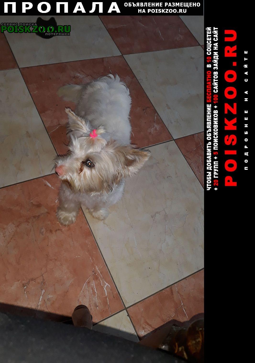 Пропала собака прошу вернуть за вознаграждения Ростов-на-Дону