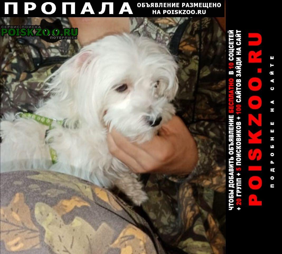 Пропала собака помогите пожалуйста Волгоград