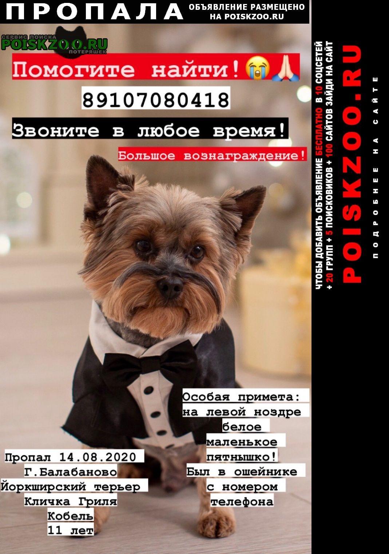 Пропала собака помогите найти  Балабаново