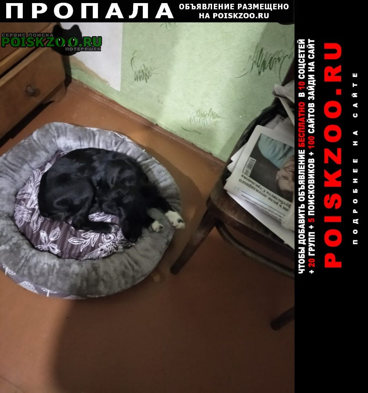 Иркутск Пропала собака