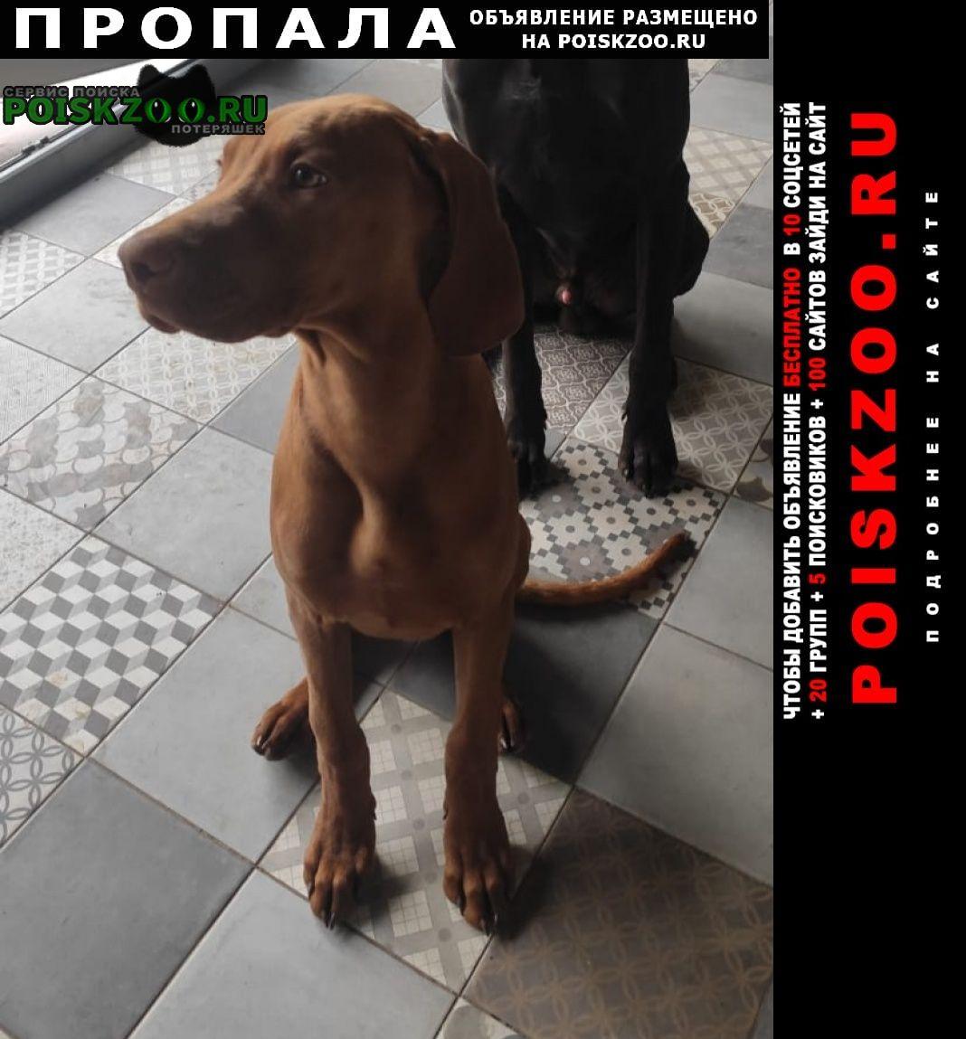 Чехов Пропала собака