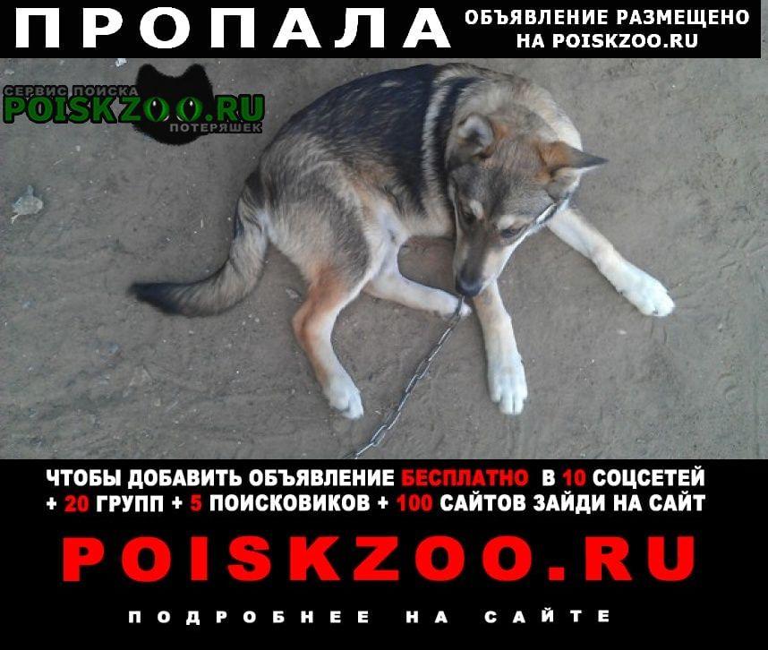 Ейск Пропала собака
