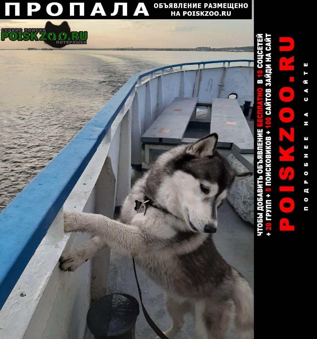 Пропала собака хаски Казань