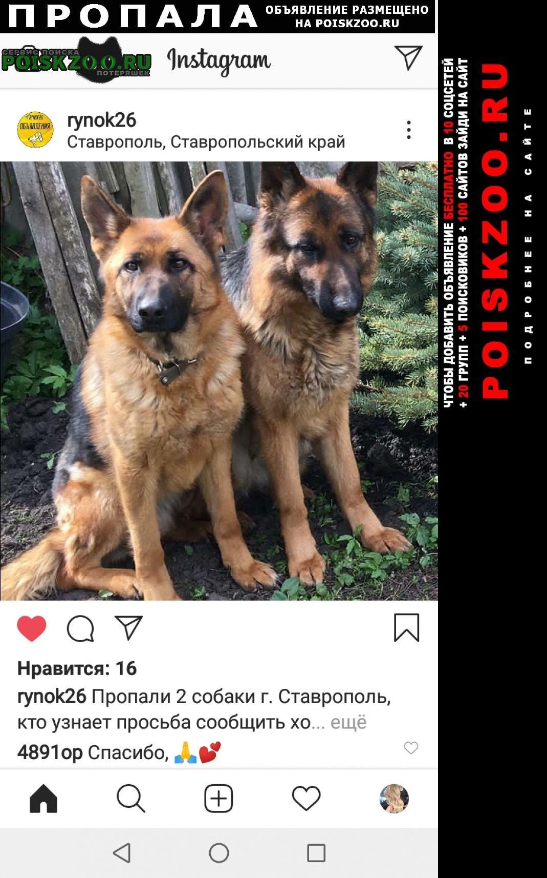 Пропала собака срочно срочно срочно Ставрополь