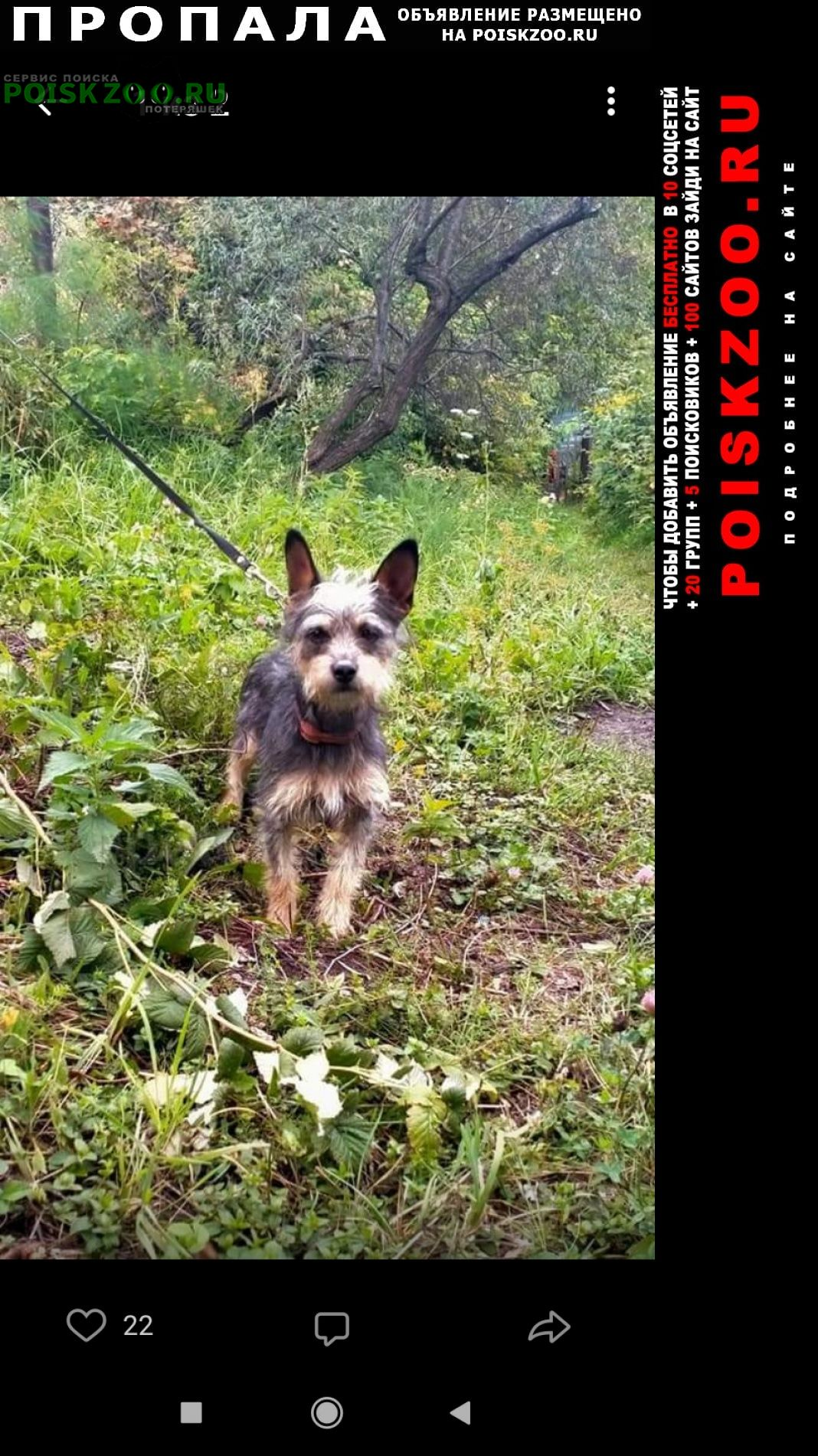 Новосибирск Пропала собака на улице твардовского 2