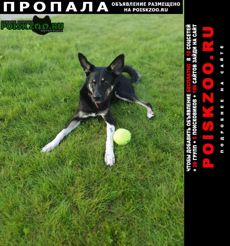 Пропала собака кличка жук Красноярск