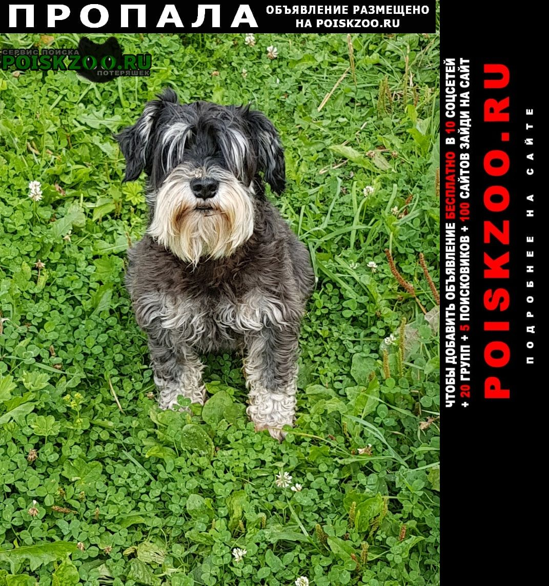 Пропала собака Красногорск