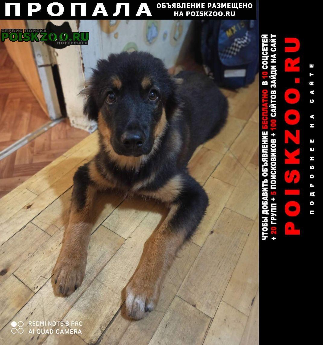 Щекино Пропала собака отзывается на кличку шерхан.