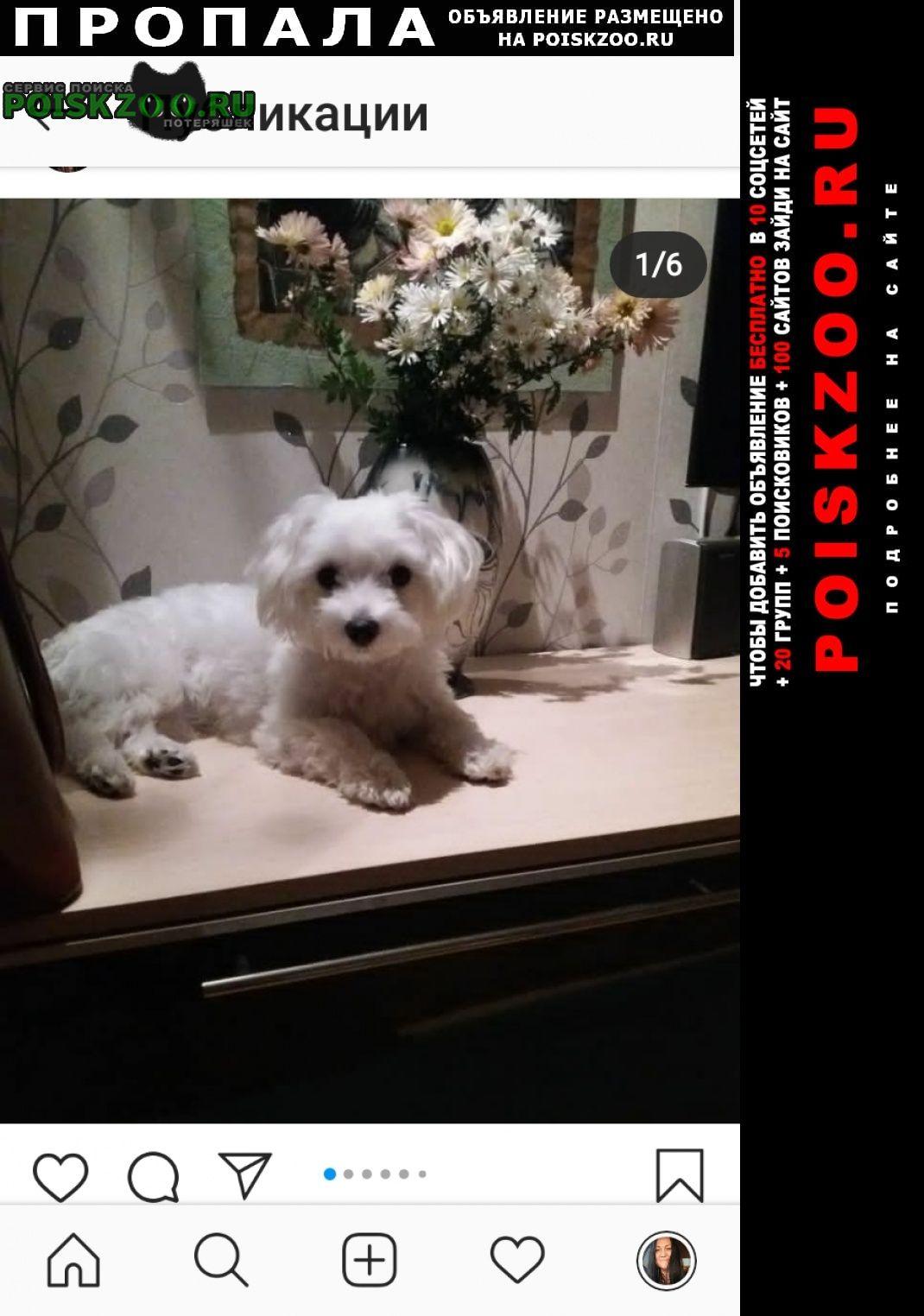 Волгоград Пропала собака мальтийская балонка