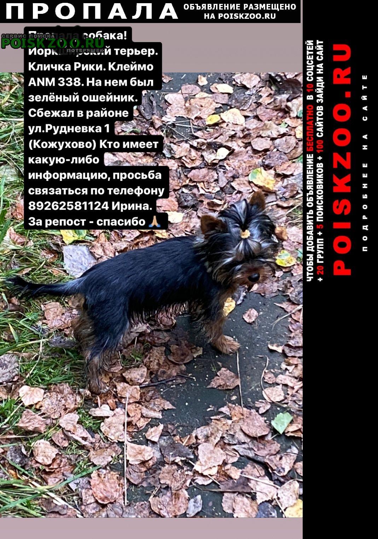 Пропала собака ул.рудневка (кожухово) Москва