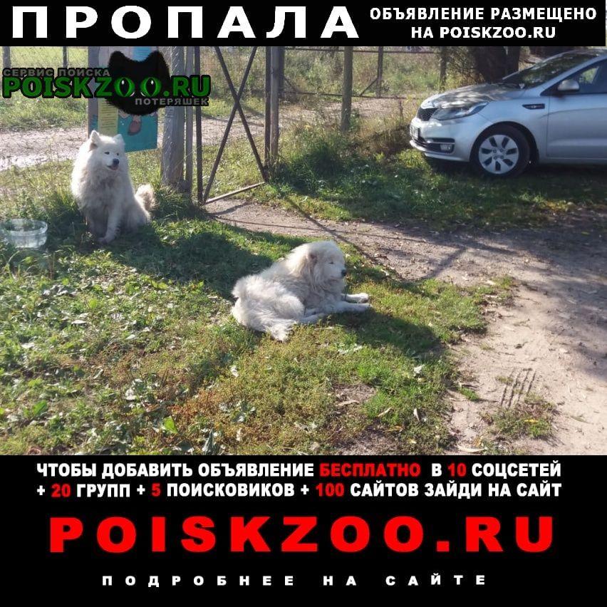 Пропала собака разыскиваются 2 собаки Чехов
