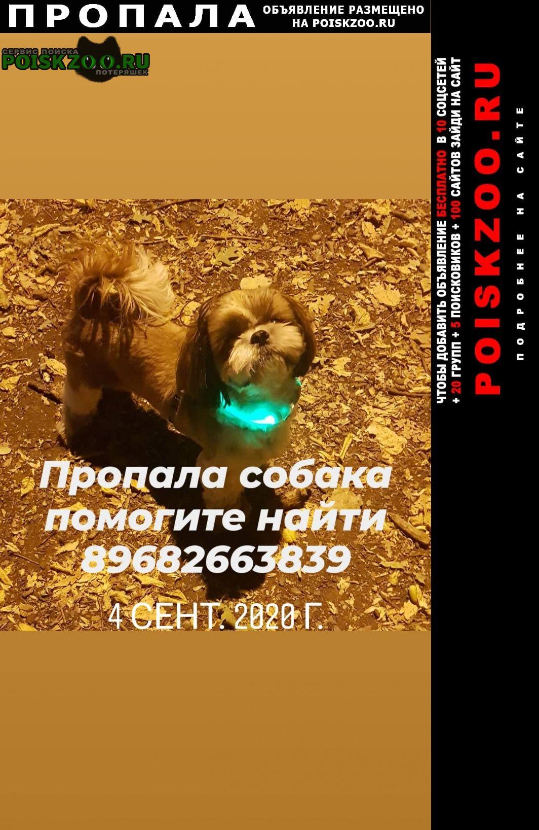 Пропала собака пожалуйста верните друга Ставрополь