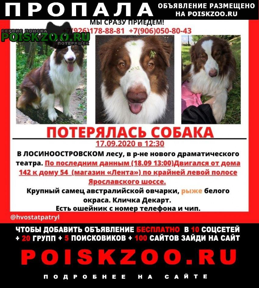 Пропала собака пёс Москва