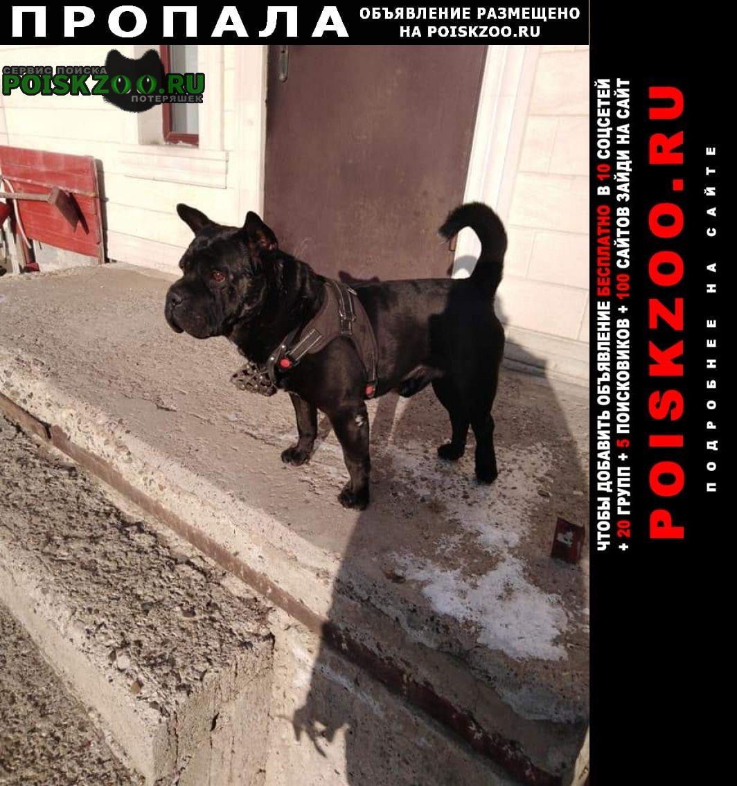 Пропала собака за вознаграждение Оренбург