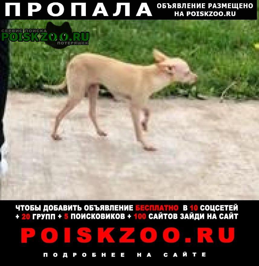 Пропала собака помогите найти джерри Уфа