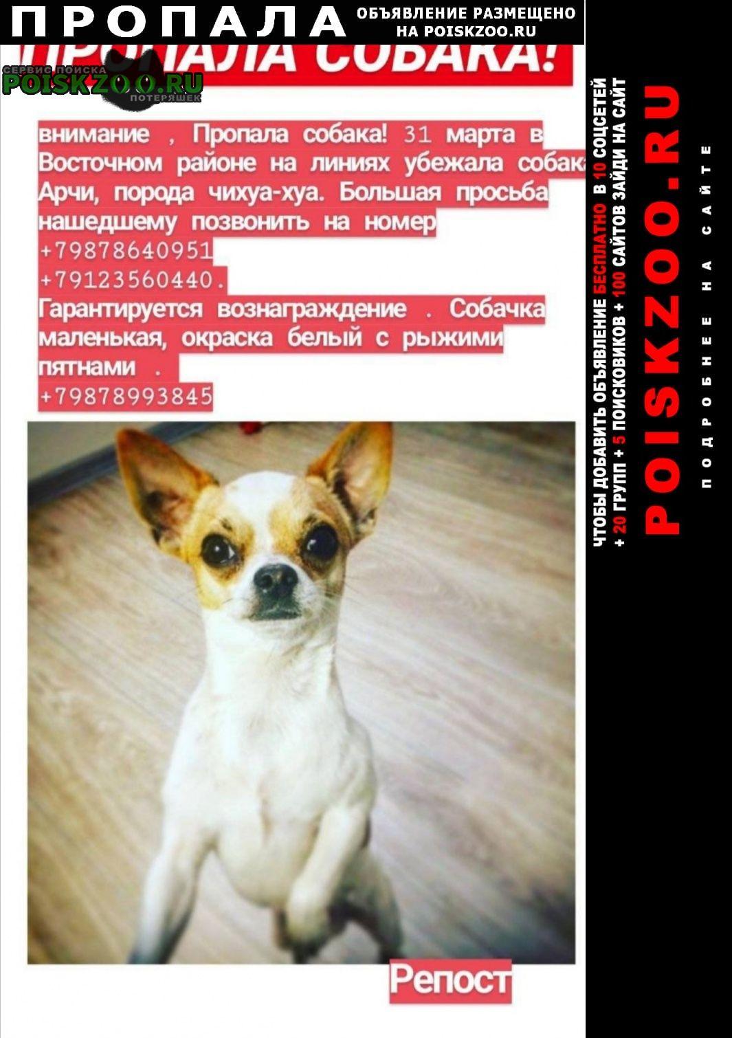 Пропала собака помогите найти  Оренбург