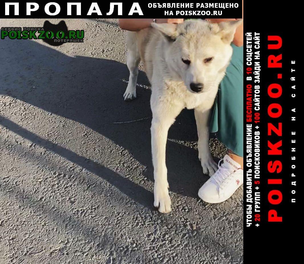 Пропала собака потерялась   sos  Ростов-на-Дону