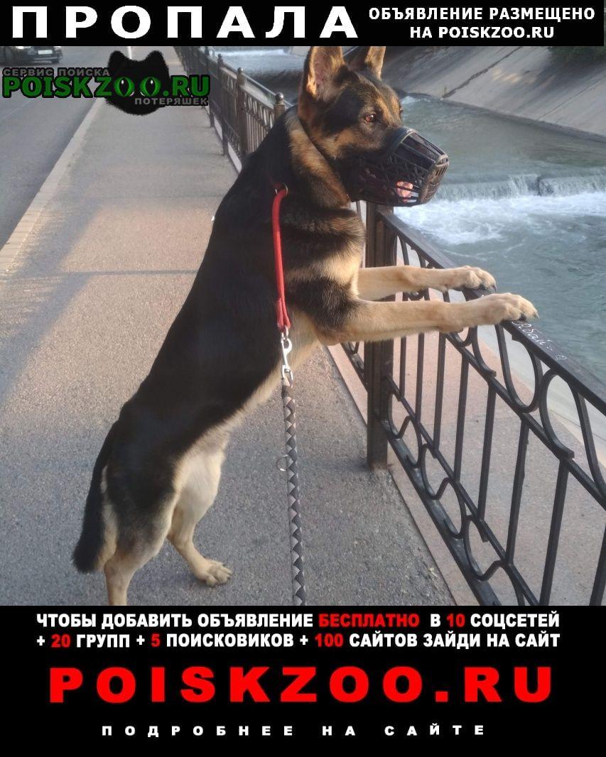 Пропала собака помогите вернуть члена семьи Алматы (Алма-Ата)