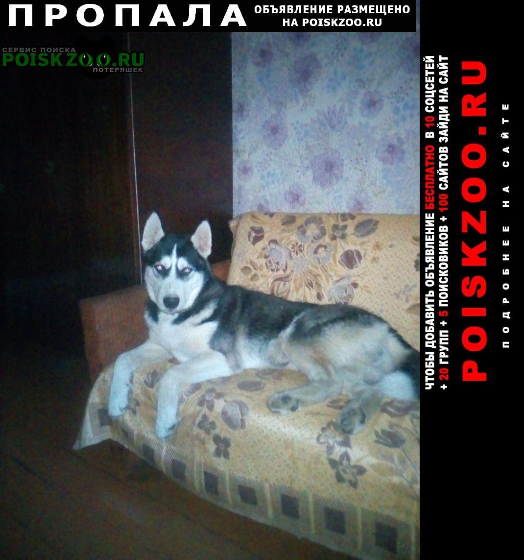 Пропала собака Онега