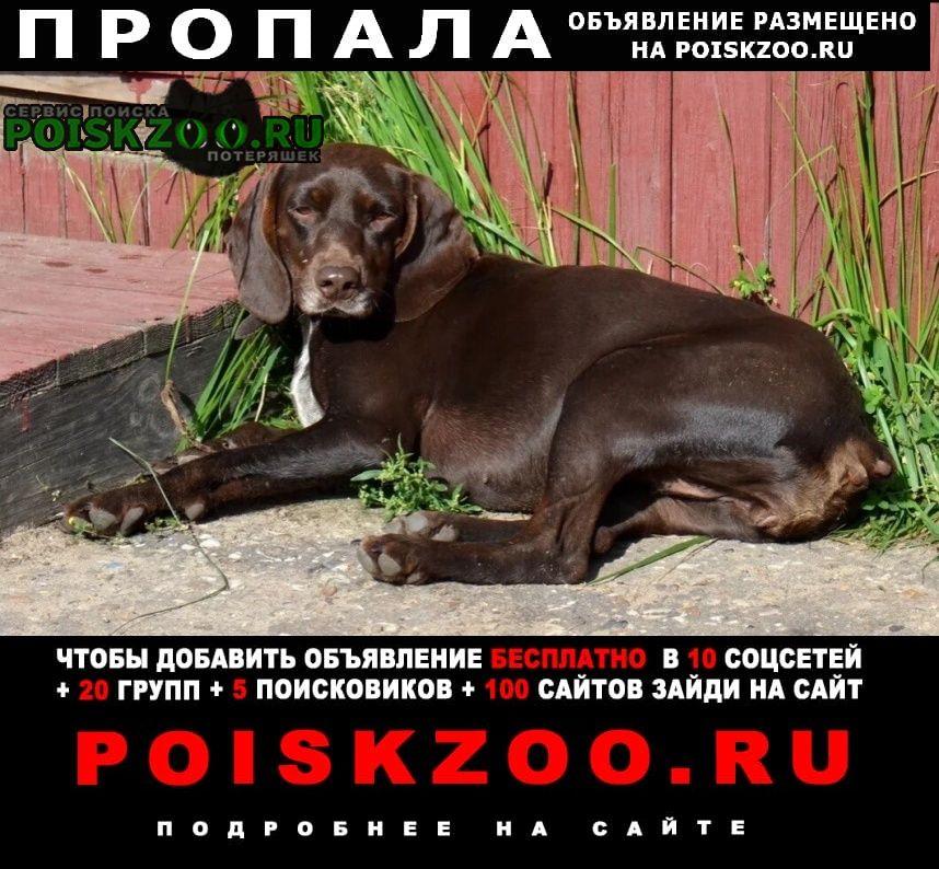 Пропала собака Куровское