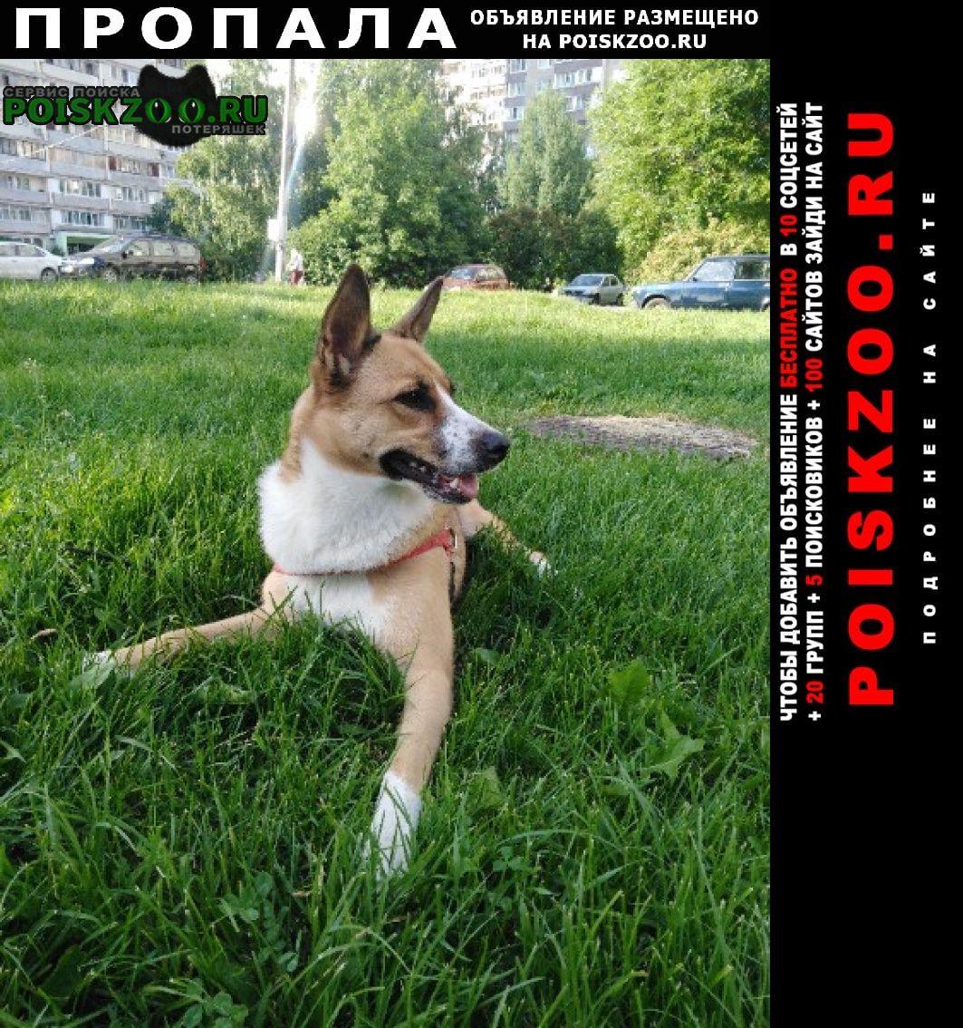Пропала собака в Зеленоград