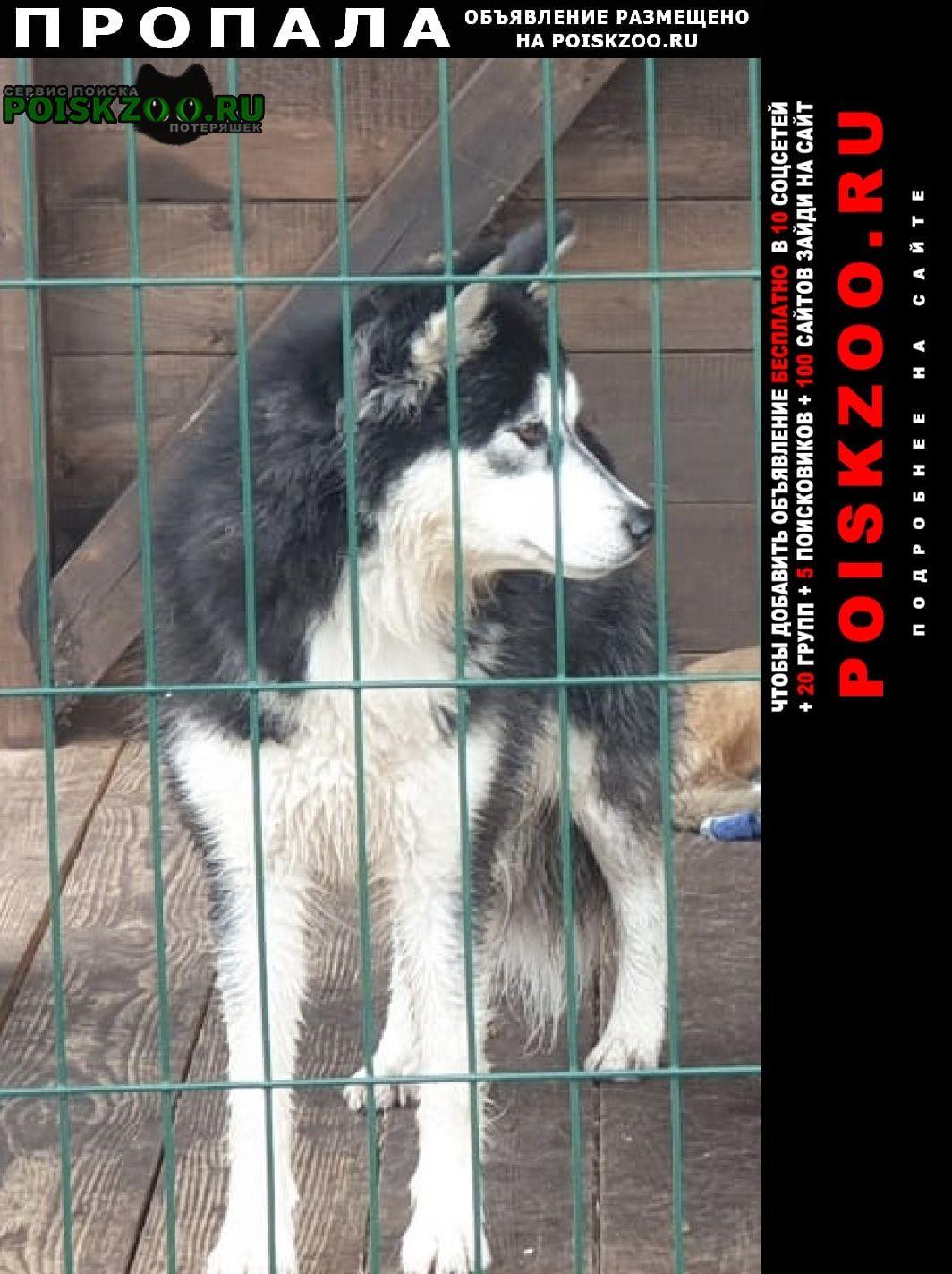 Пропала собака потерялась Кемерово