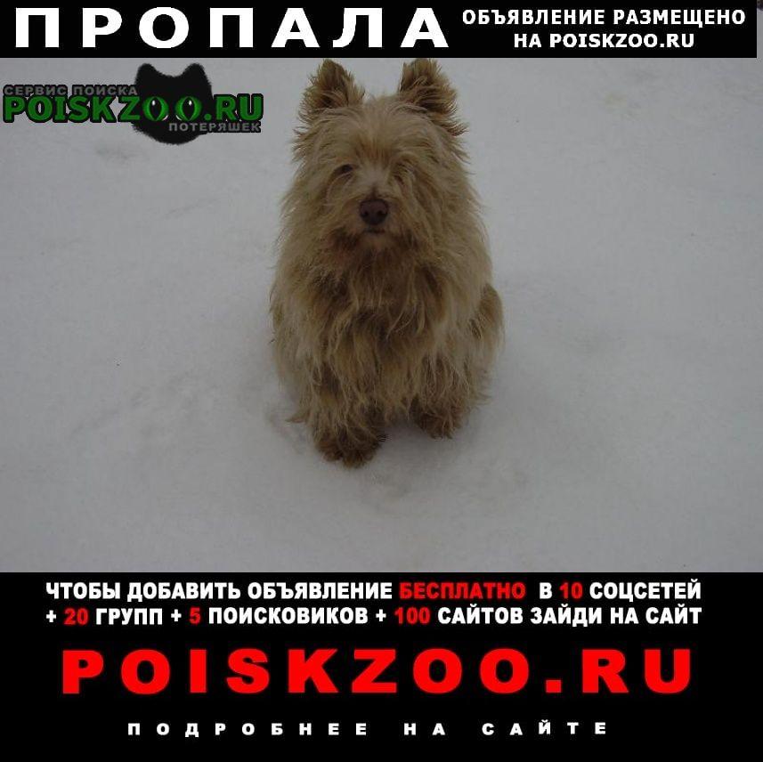 Пропала собака с. надеждино Омск
