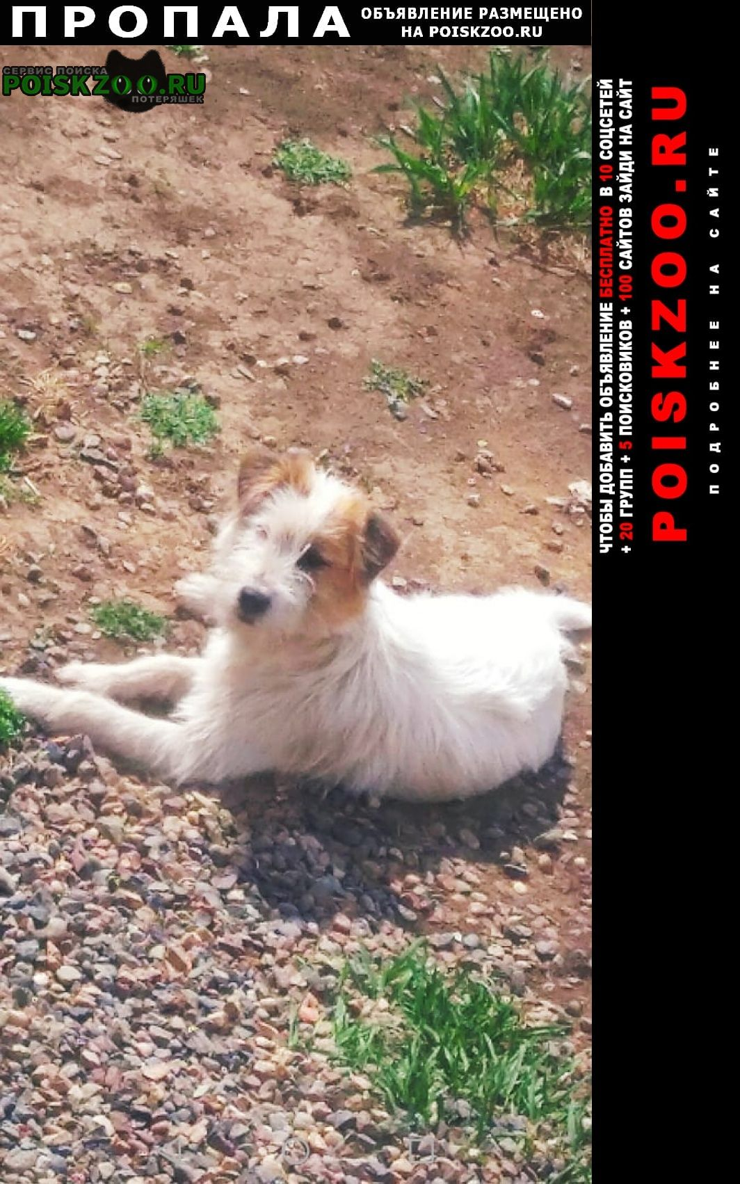 Пропала собака джек рассел терьер мальчик 1 год Красноярск