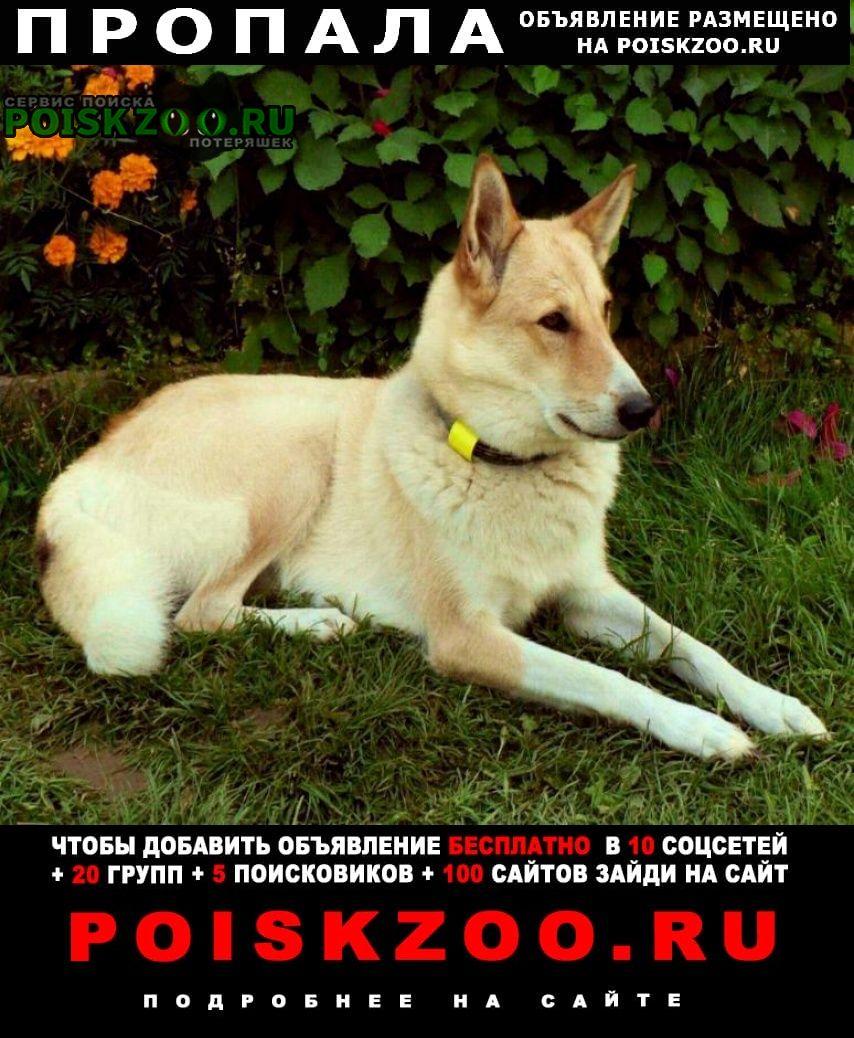 Пропала собака потерялась лайка зсл Истра