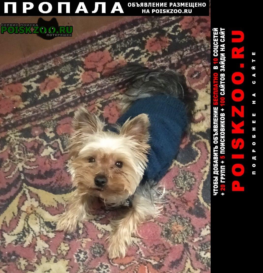 Пропала собака помогите найти собаку   Керчь