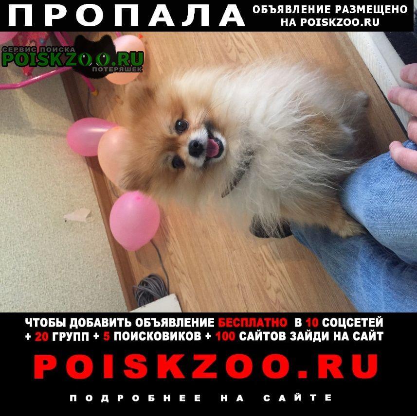 Пропала собака помогите найти нашего любимого чарли, он Саратов