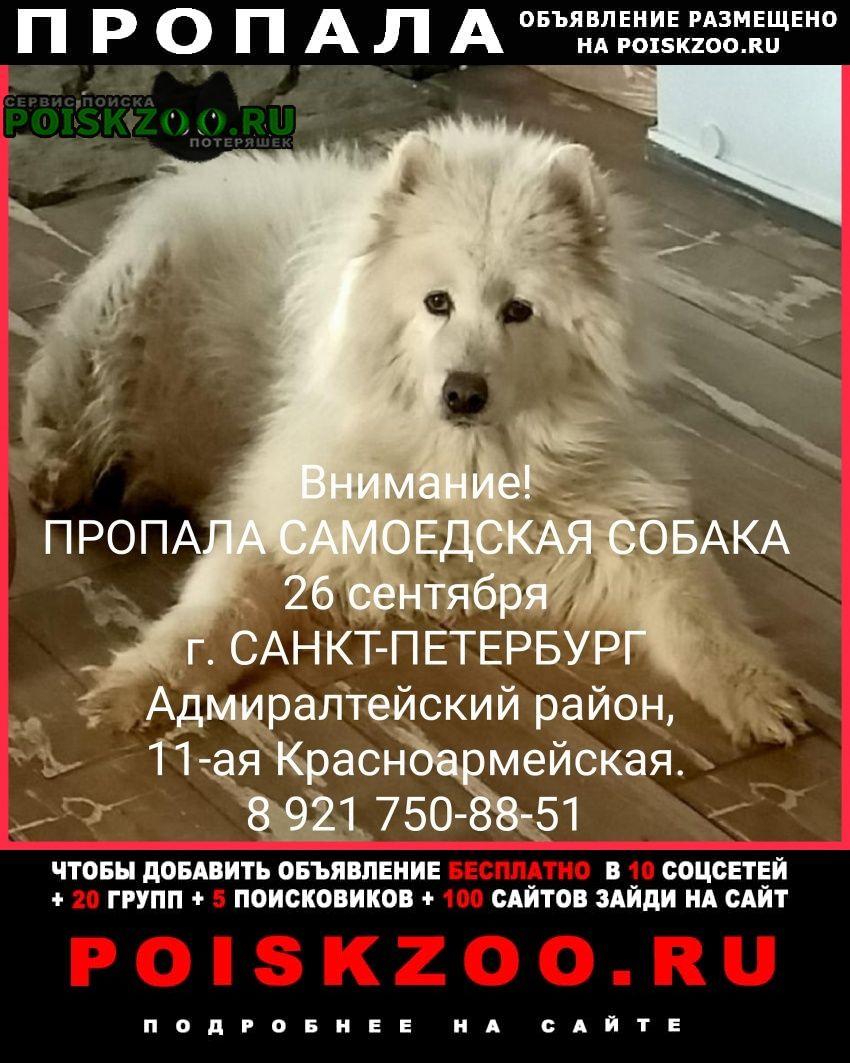 Пропала собака. помогите найти Санкт-Петербург