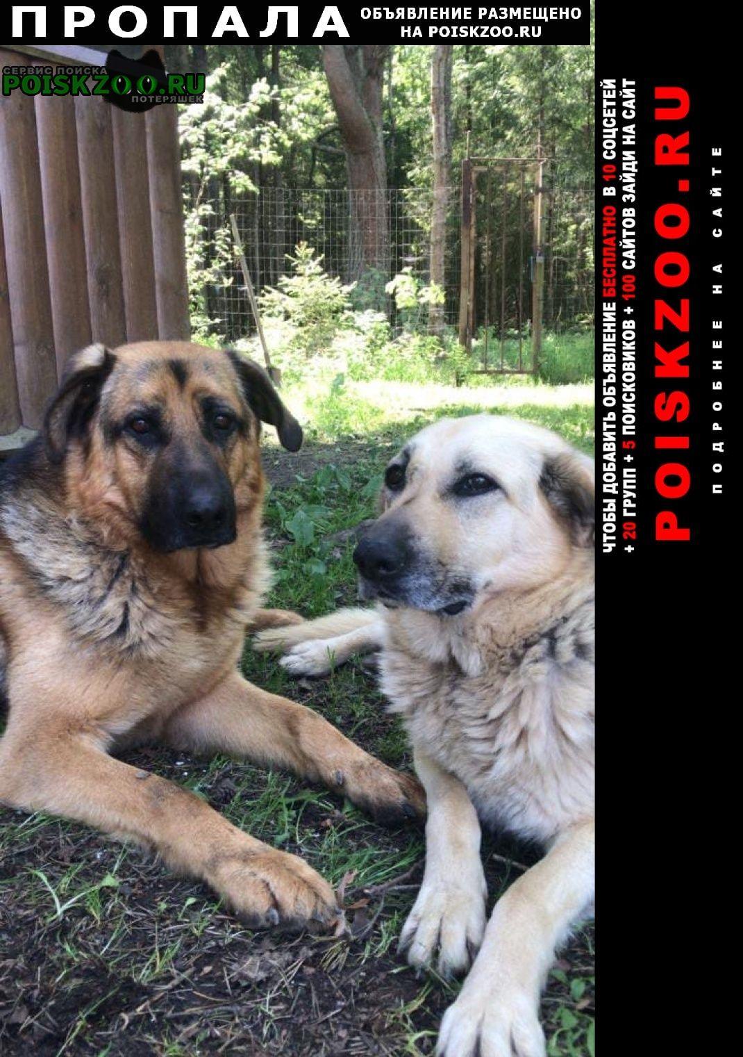Пропала собака и две собаки, мальчик и девочка Дружная Горка