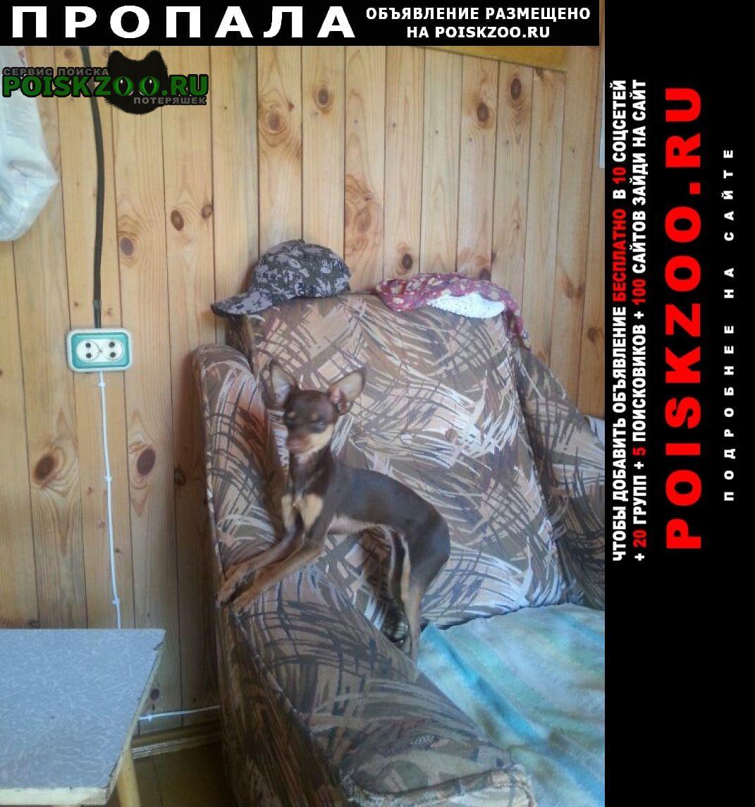 Пропала собака Москва