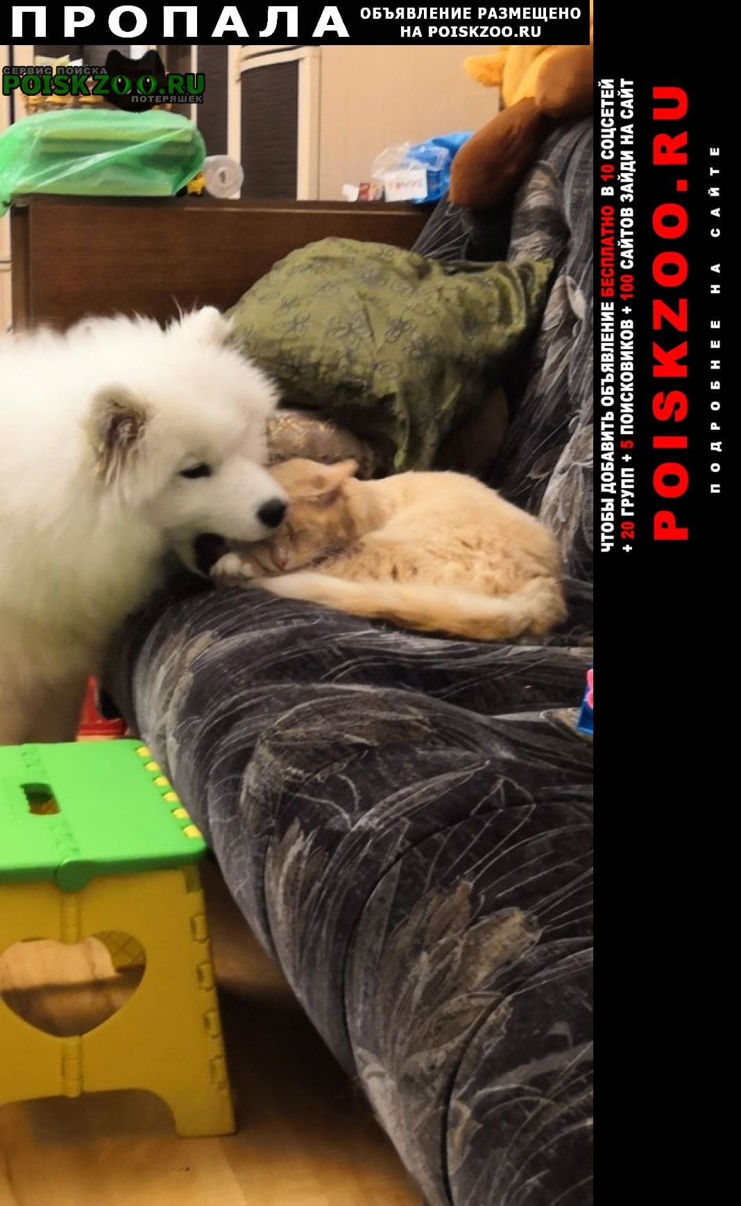 Пропала собака самоед умка Щекино