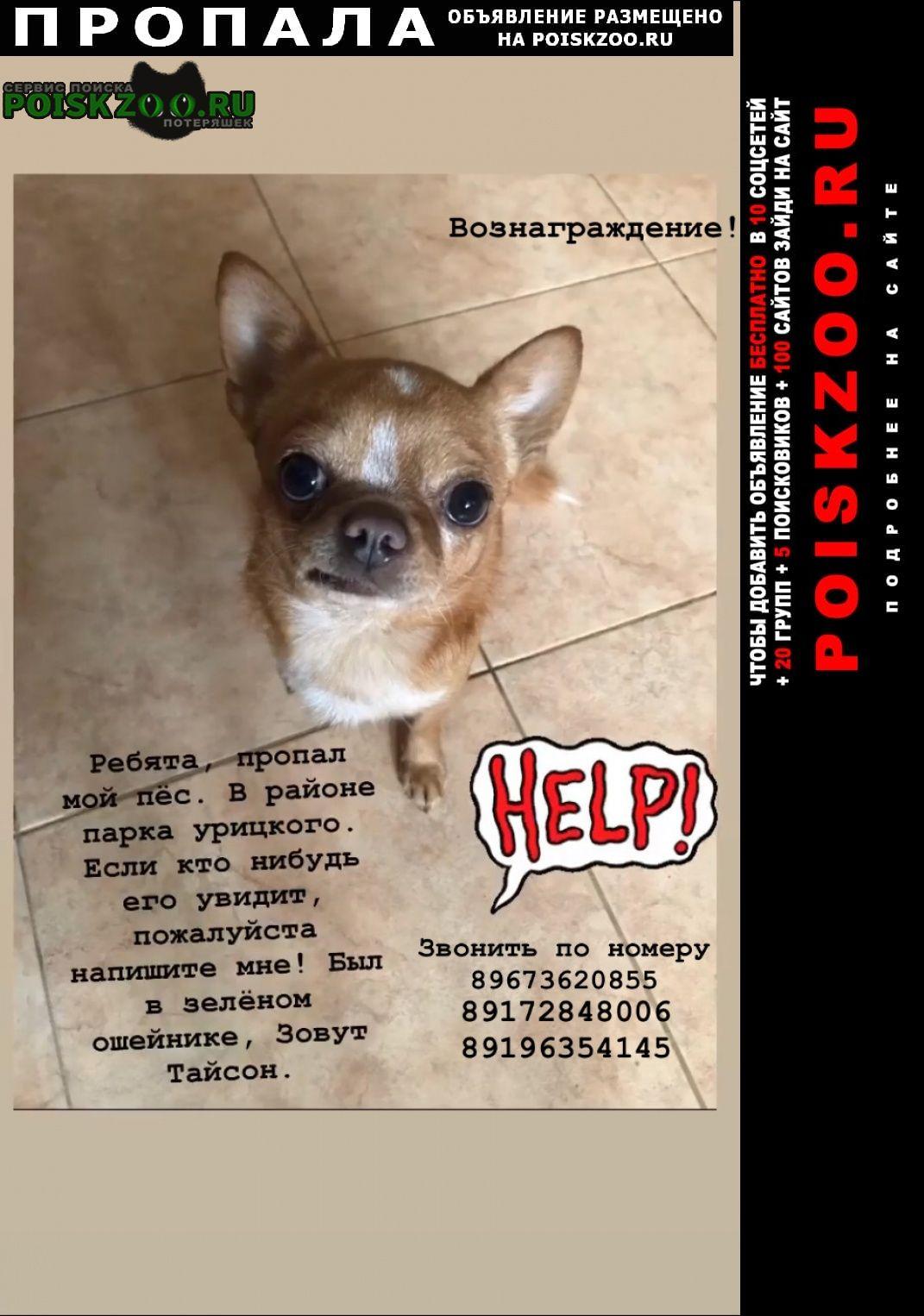 Пропала собака Казань