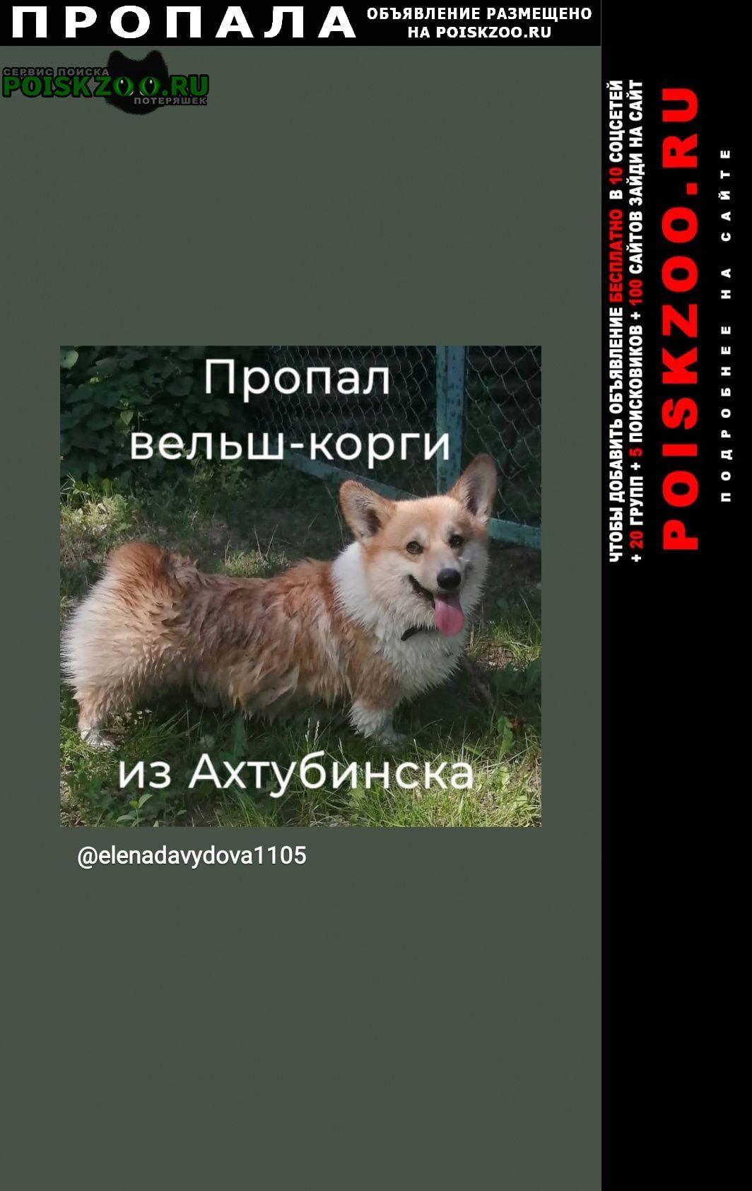 Ахтубинск Пропала собака вельш-корги из а
