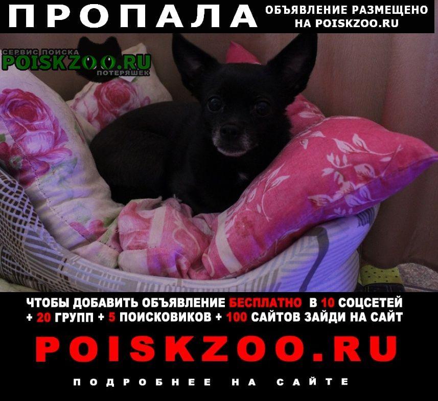 Пропала собака черная чихуахуа Москва