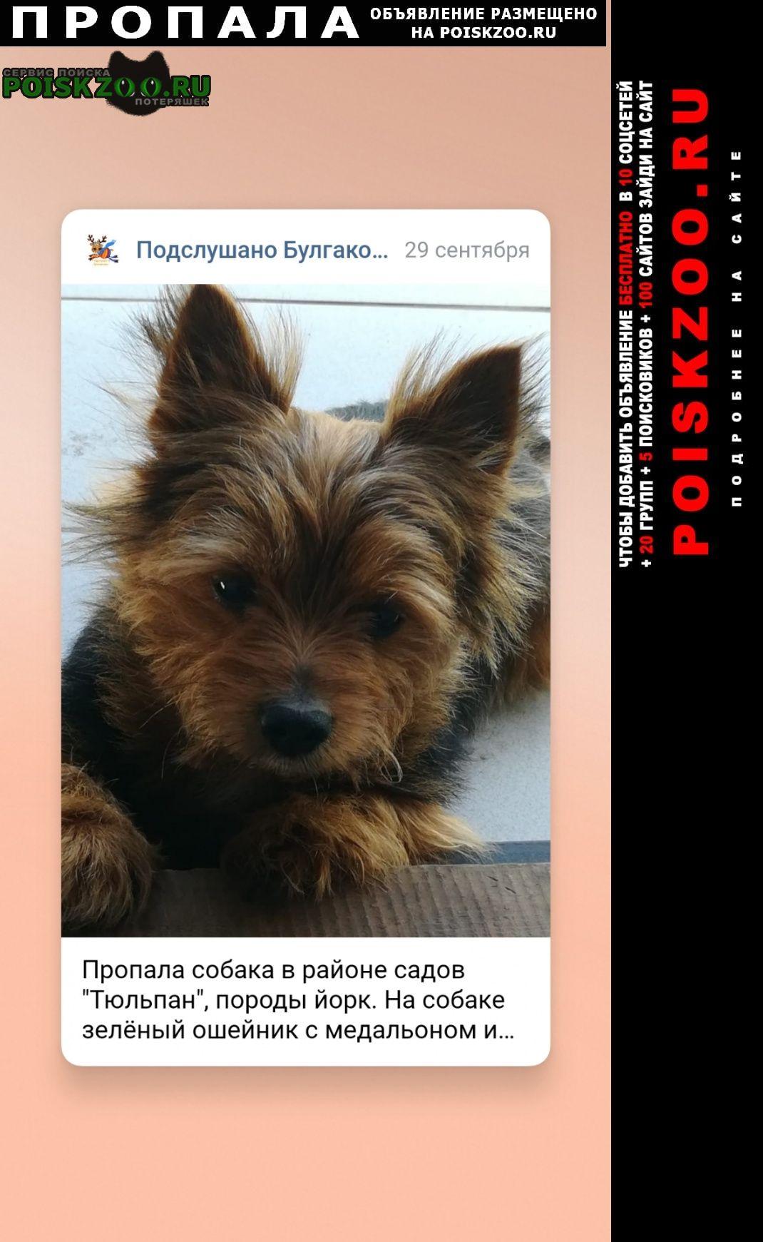 Пропала собака булгаковский сельсовет снт тюльпан Уфа