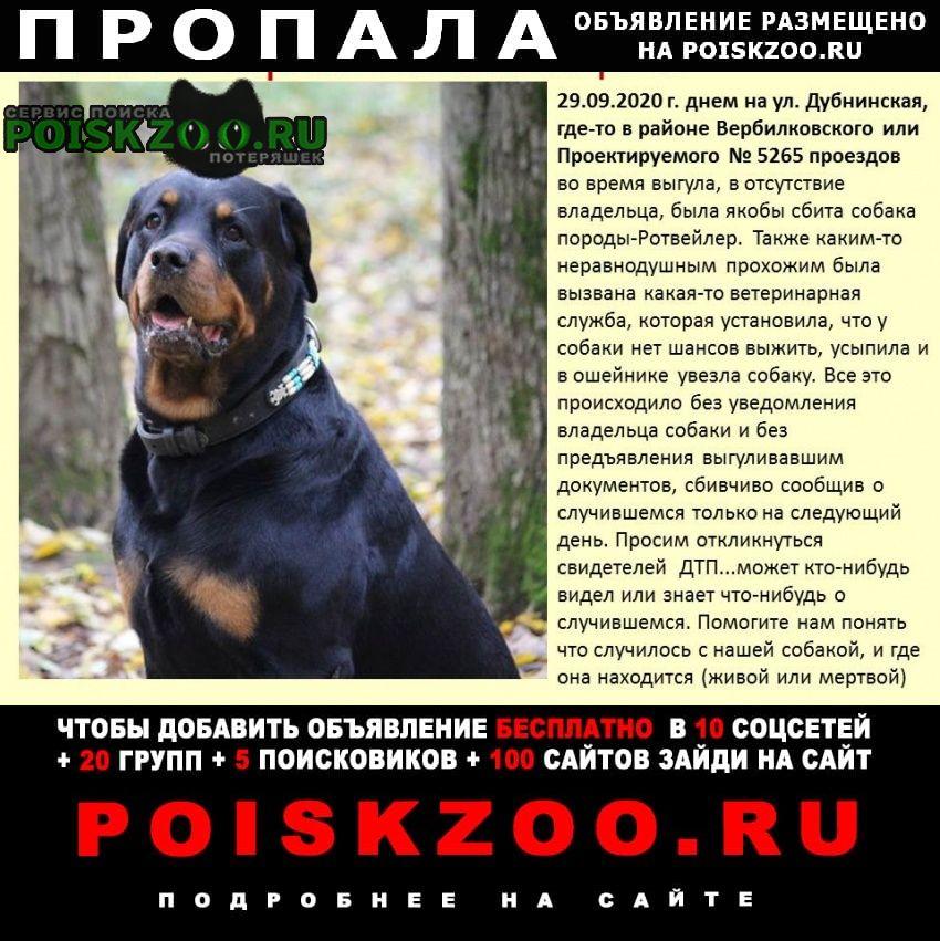 Пропала собака наш друг Москва