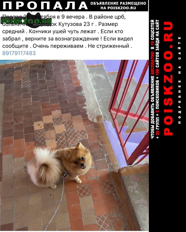 Пропала собака шпиц рыжий померанский Лениногорск