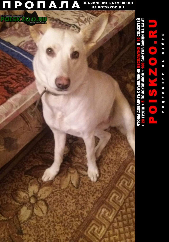 Воронеж Пропала собака кличка боня желтый ошейни