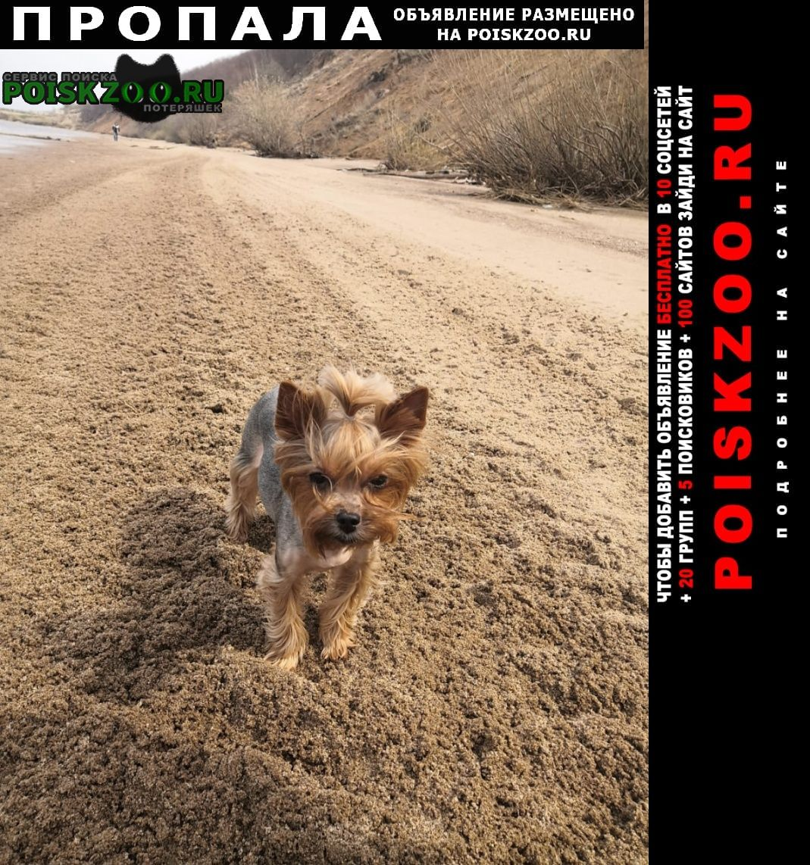 Ульяновск Пропала собака йоркширский терьер