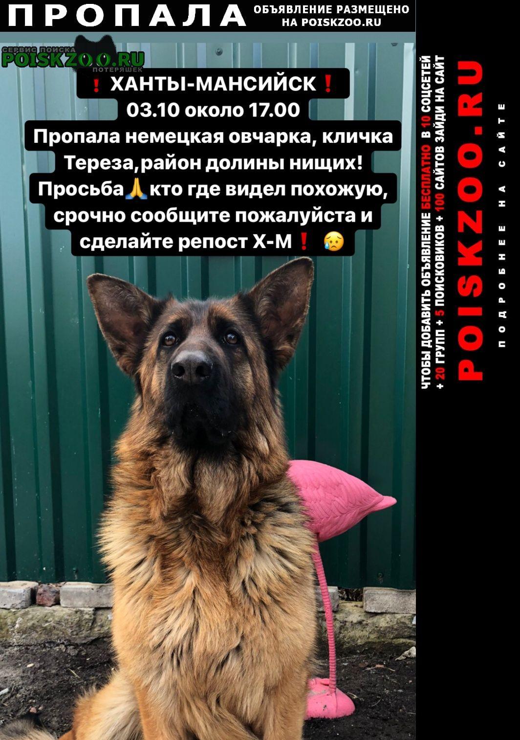 Ханты-Мансийск Пропала собака