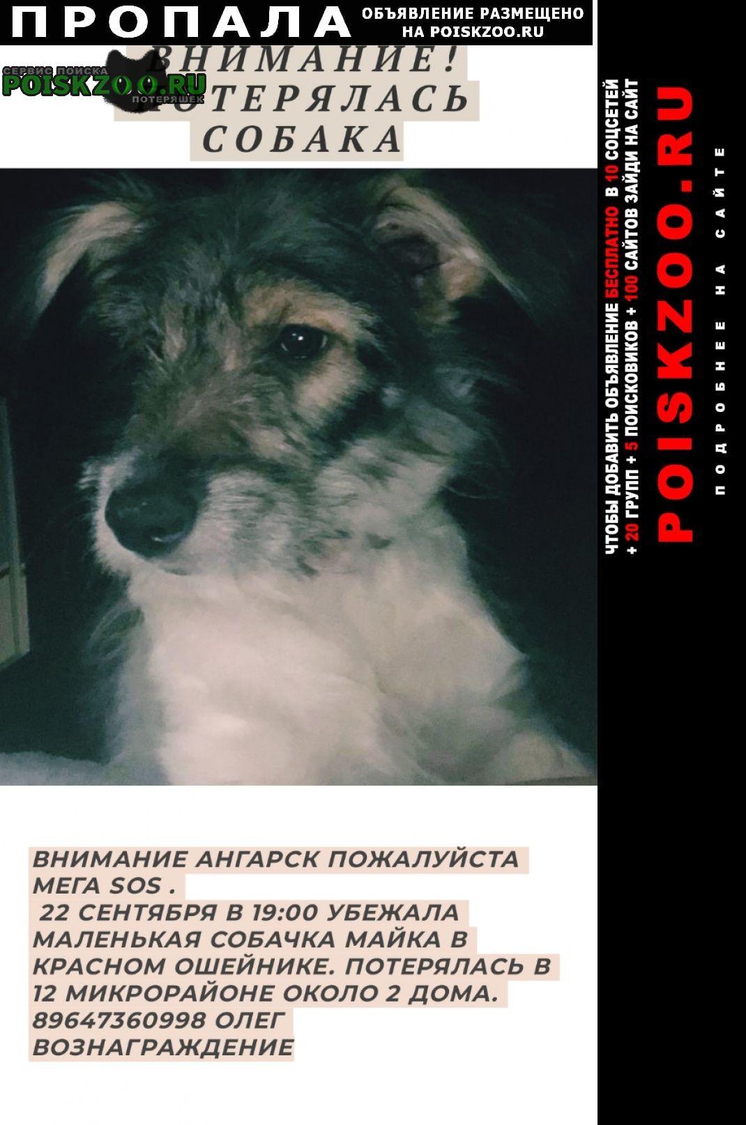 Пропала собака внимание   Ангарск