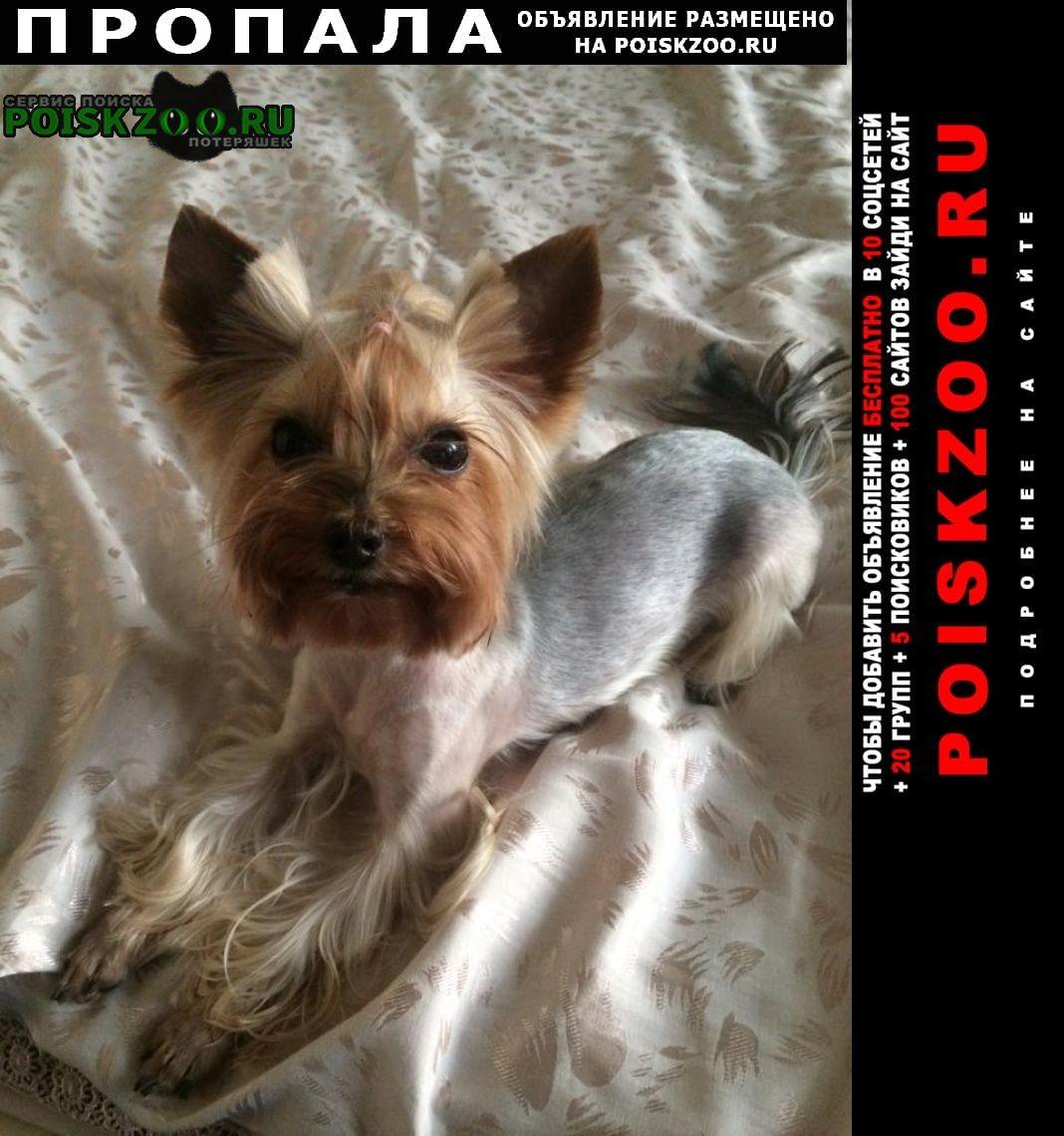 Пропала собака девочка йорк мини Москва