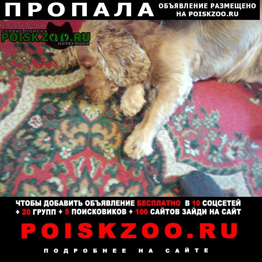 Пропала собака нашли Новосибирск