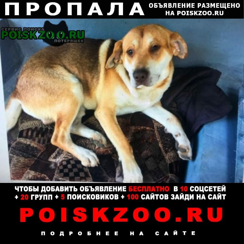 Пропала собака Каменск-Шахтинский