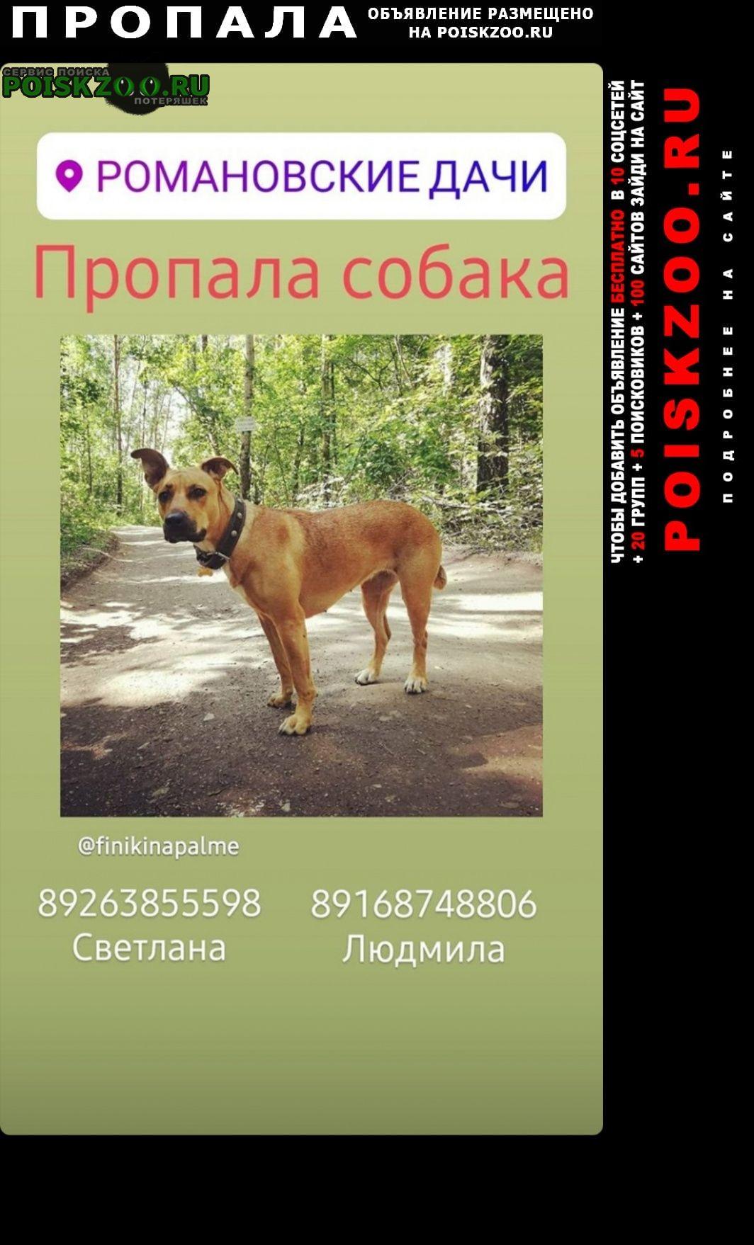 Пропала собака Заокский