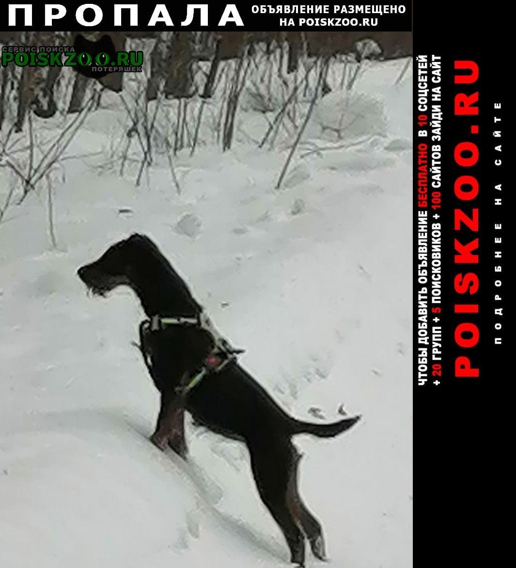 Белоярский (Свердловская обл.) Пропала собака